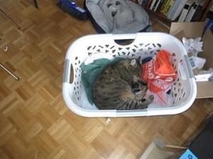 das ist meine Katze Mira beim schlafen. Ist sie nicht süss?